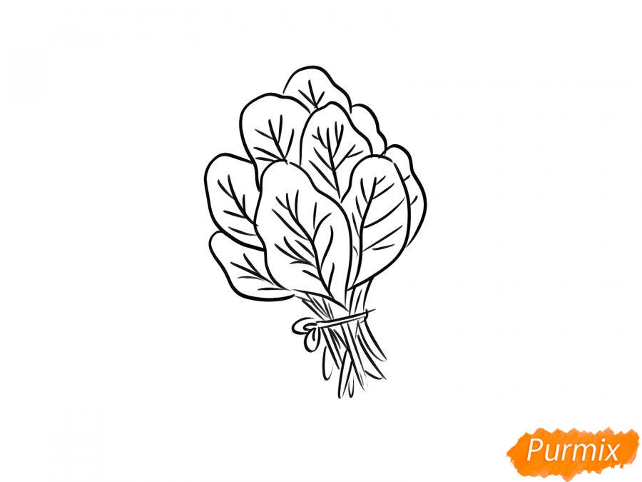 Рисуем пучок шпината - шаг 6