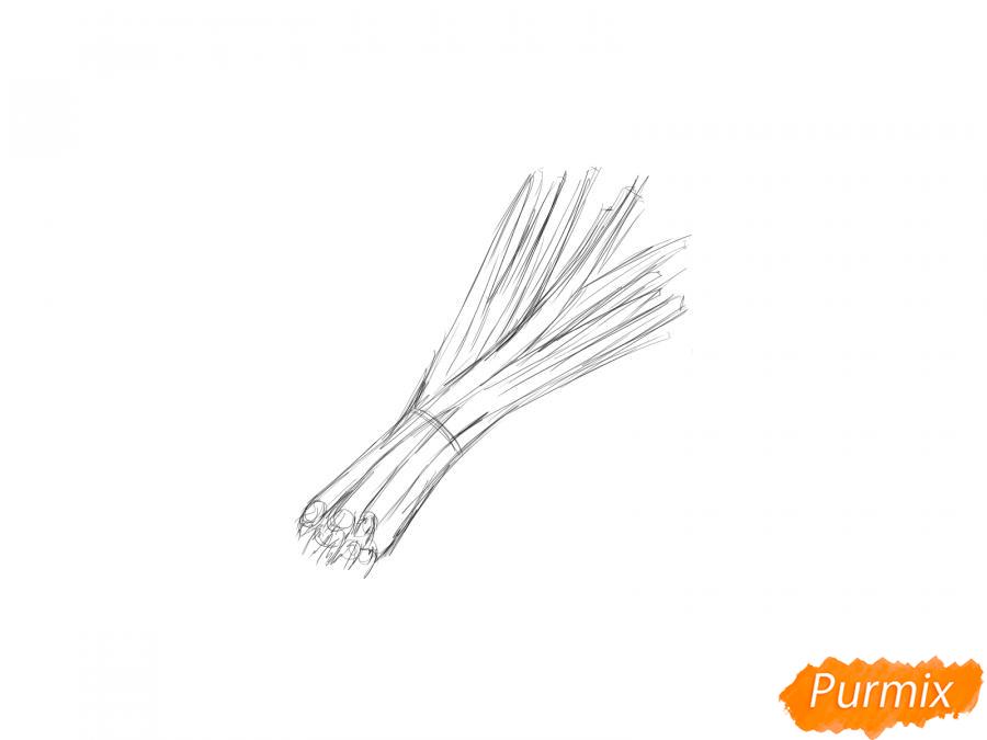 Рисуем пучок зеленого лука - шаг 4