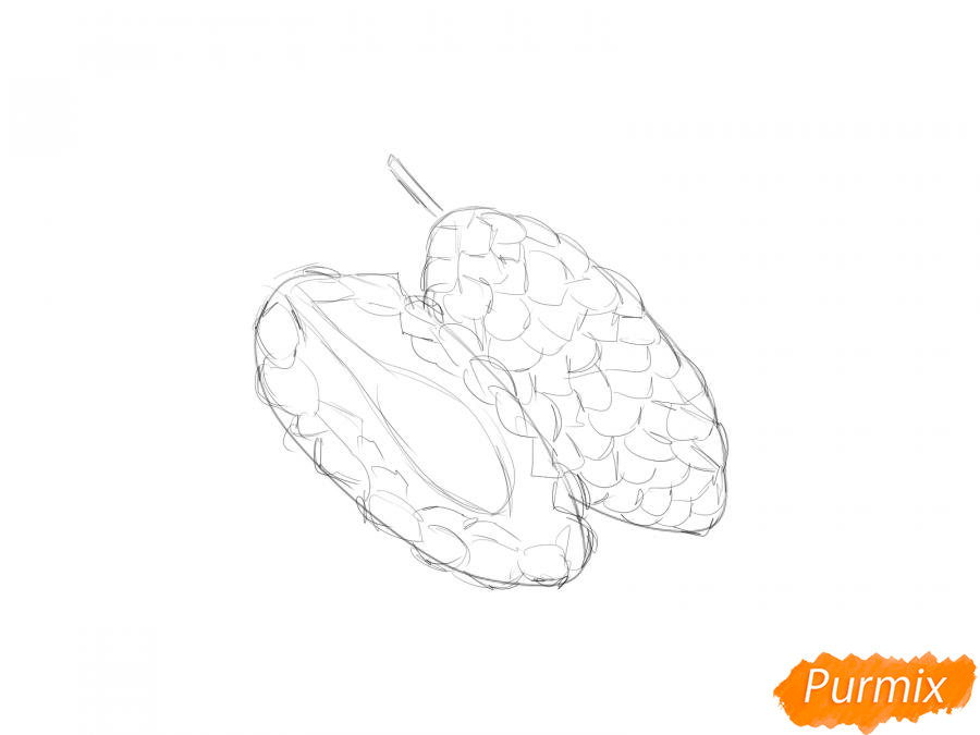 Рисуем шелковицу в разрезе - шаг 4