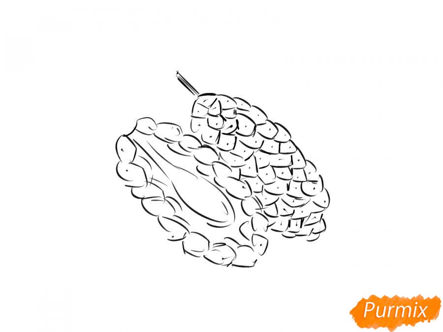 Рисуем шелковицу в разрезе - шаг 5