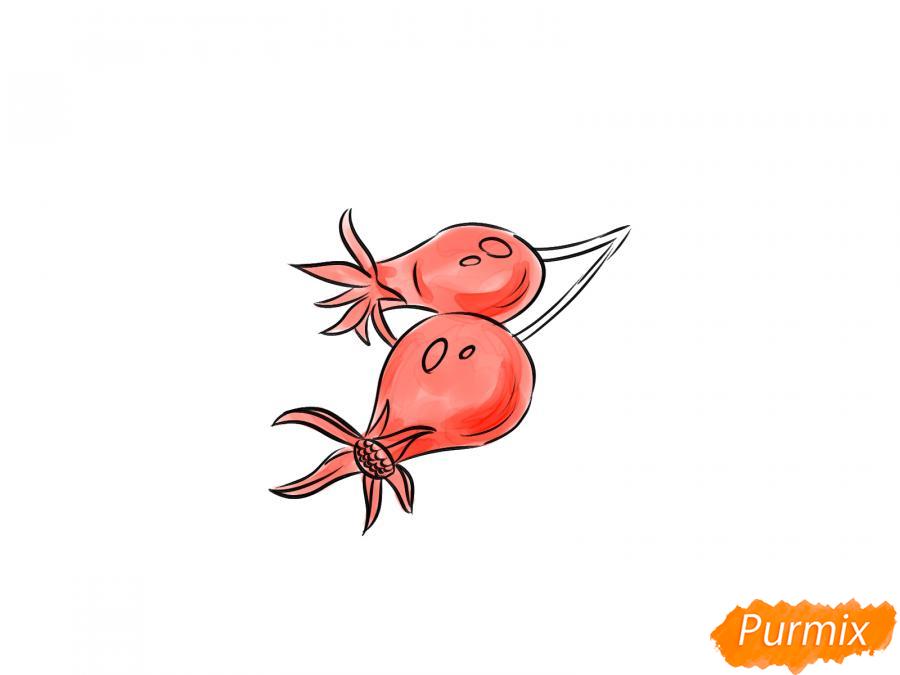 Рисуем шиповник карандашами - шаг 6