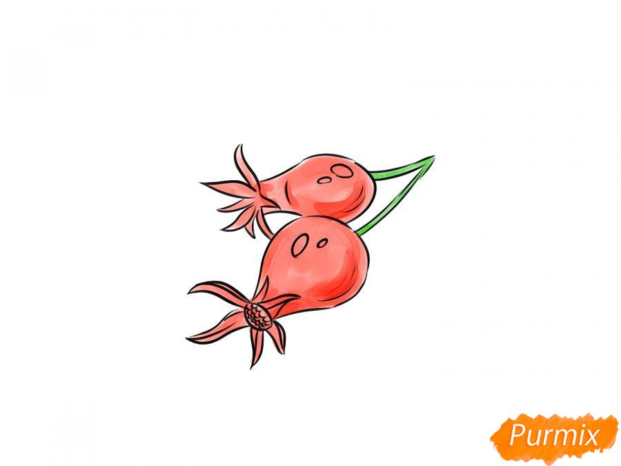 Рисуем шиповник карандашами - шаг 7