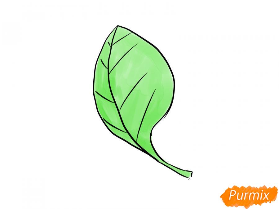 Рисуем шпинат - шаг 6