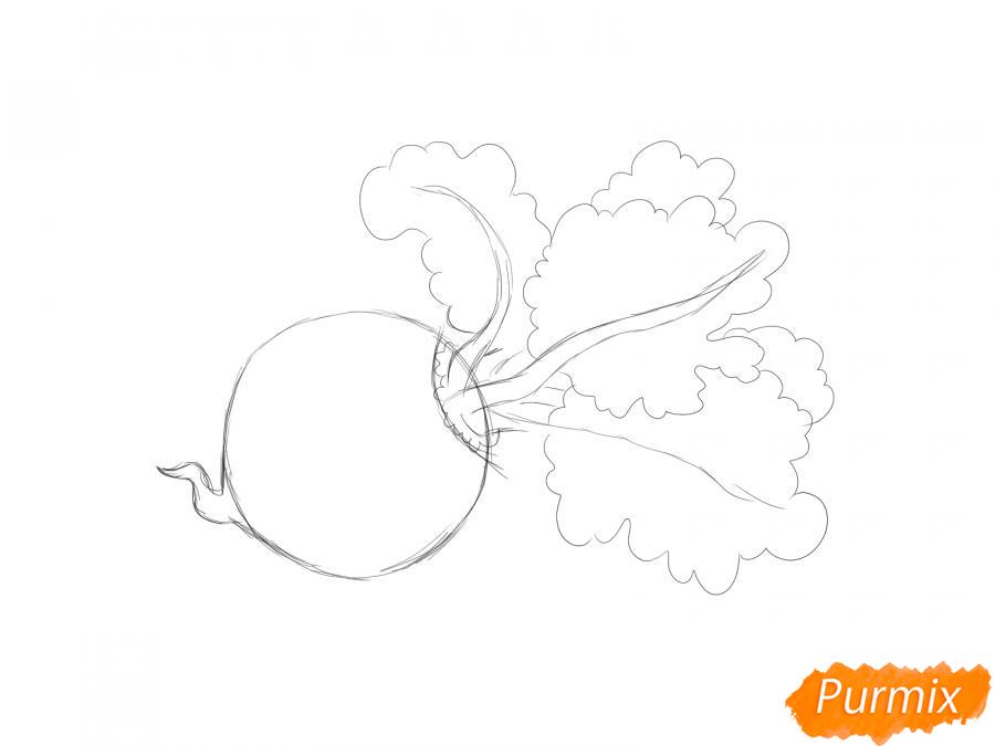 Рисуем свеклу карандашами и акварелью - шаг 3