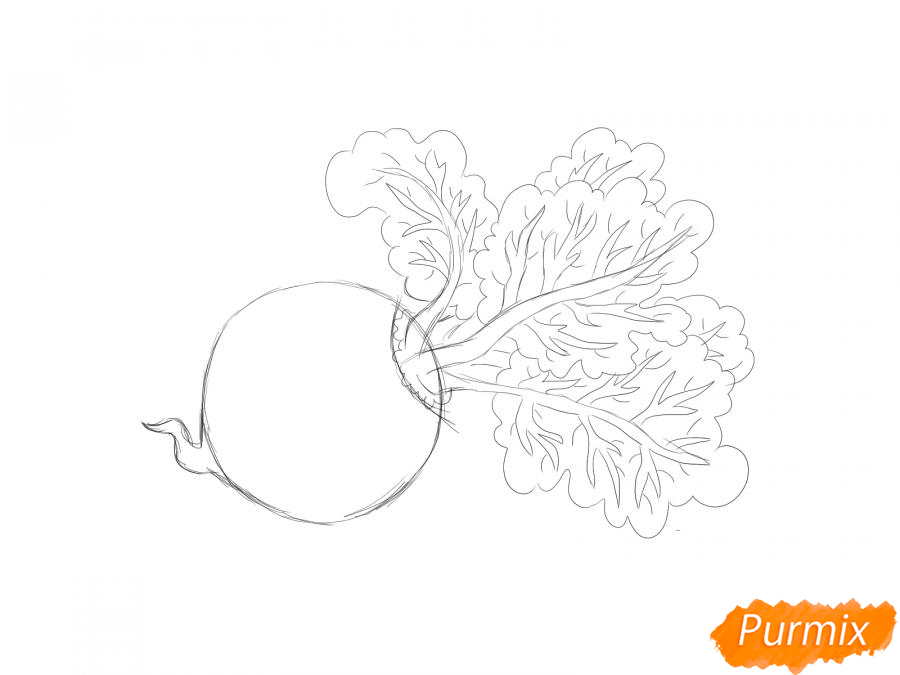 Рисуем свеклу карандашами и акварелью - шаг 4