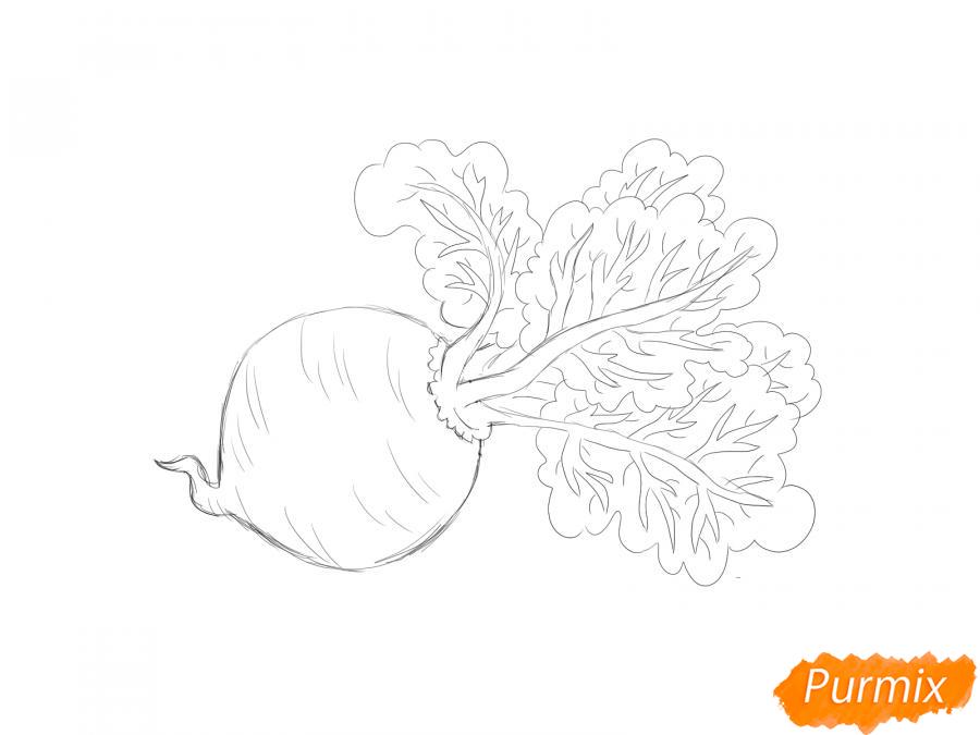 Рисуем свеклу карандашами и акварелью - шаг 5