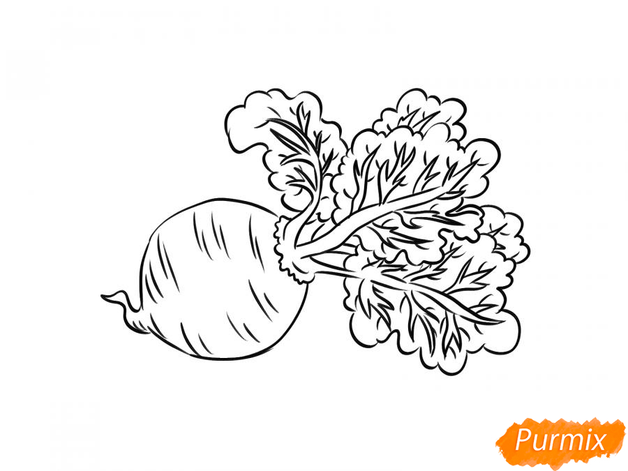 Рисуем свеклу карандашами и акварелью - шаг 6