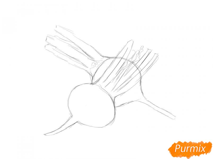 Рисуем свеклу в разрезе - шаг 3