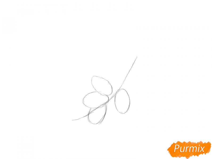 Рисуем ветку с ягодами жимолости - шаг 1