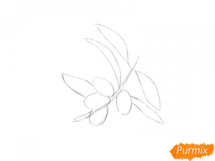Рисуем ветку с ягодами жимолости - шаг 2