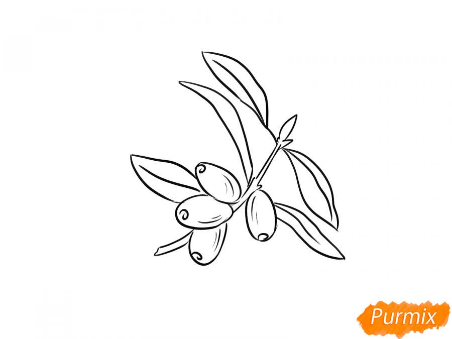 Рисуем ветку с ягодами жимолости - шаг 3