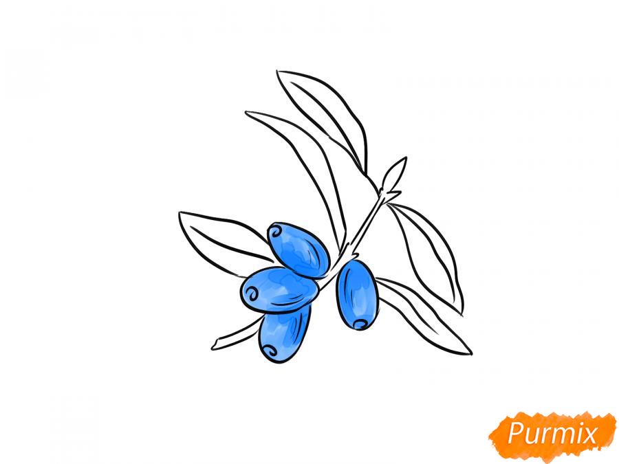 Рисуем ветку с ягодами жимолости - шаг 4