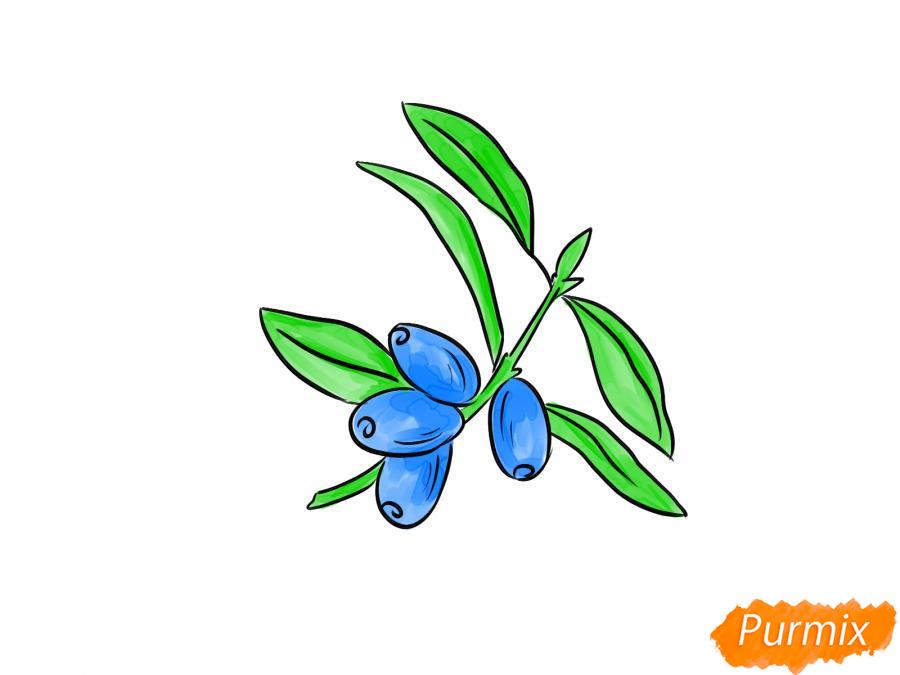 Рисуем ветку с ягодами жимолости - шаг 5