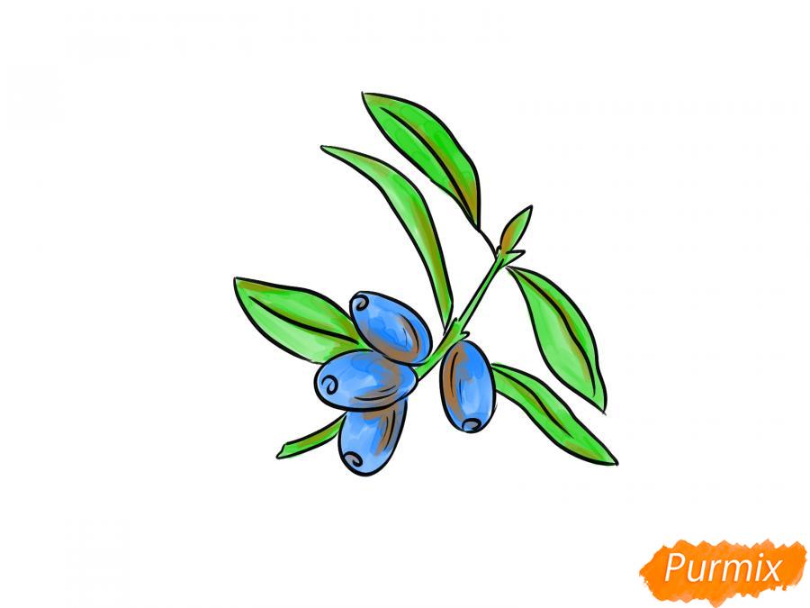 Рисуем ветку с ягодами жимолости - шаг 6
