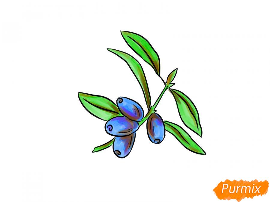 Рисуем ветку с ягодами жимолости - шаг 7