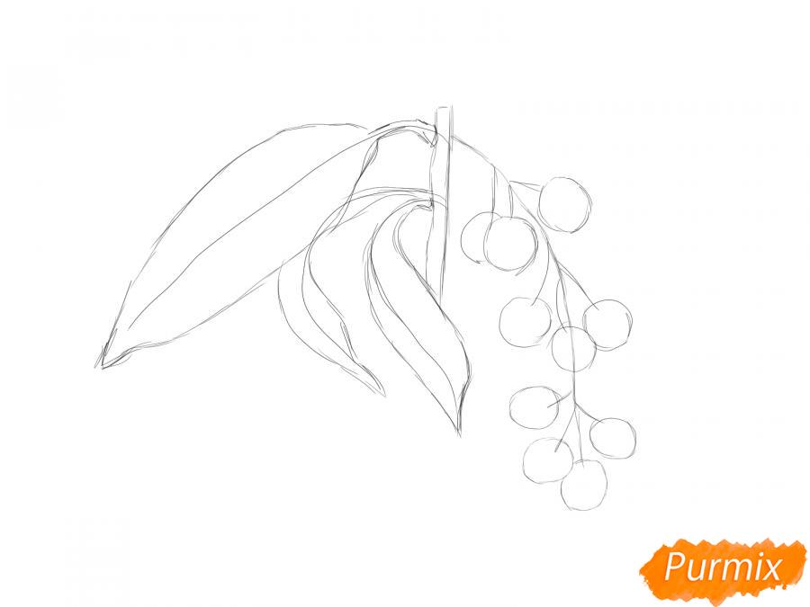 Рисуем веточку черемухи - шаг 3