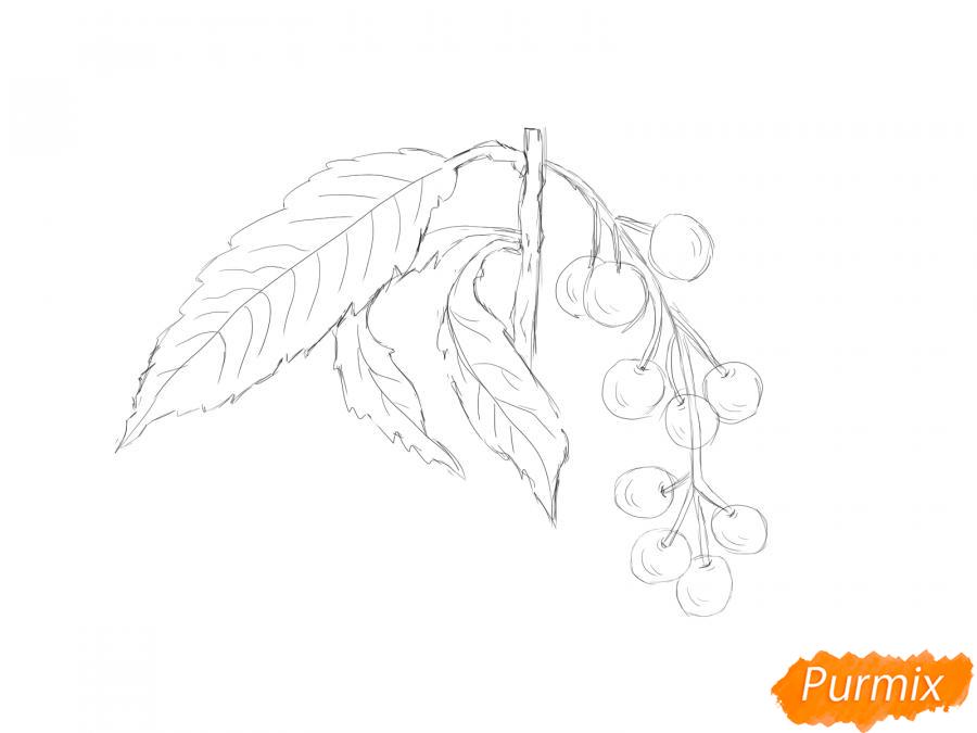 Рисуем веточку черемухи - шаг 5
