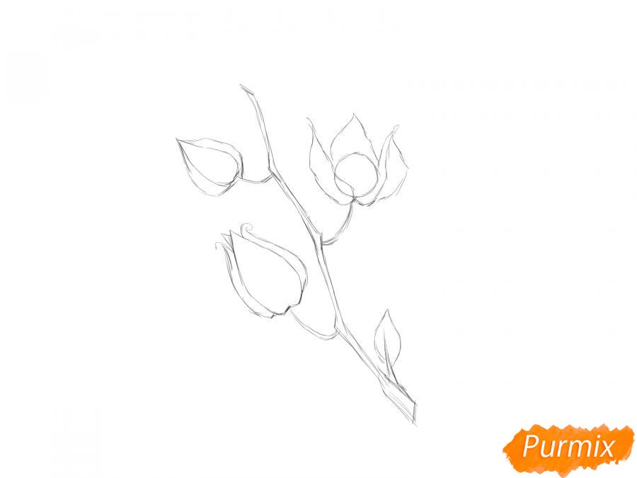 Рисуем веточку физалиса - шаг 3