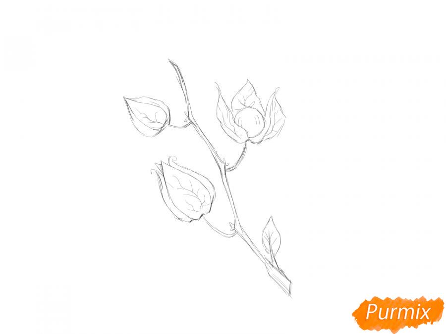 Рисуем веточку физалиса - шаг 4