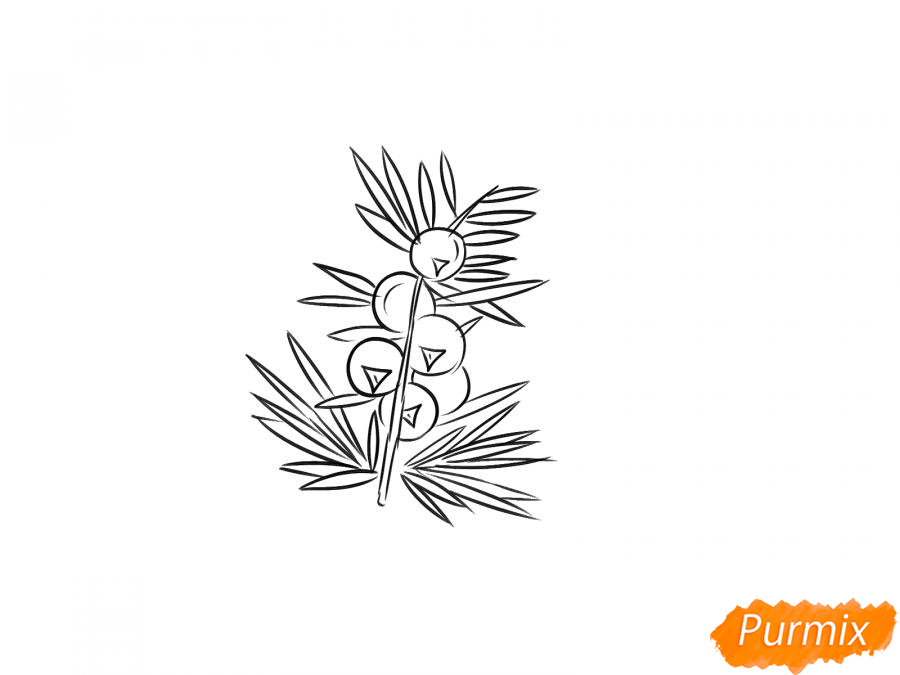 Рисуем веточку можжевельника с ягодами - шаг 5