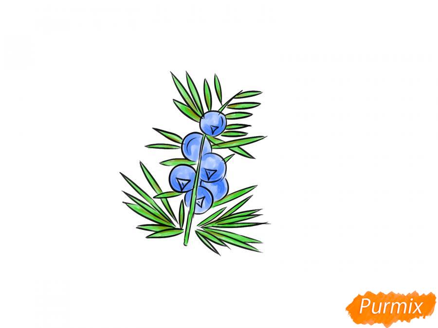 Рисуем веточку можжевельника с ягодами - шаг 7