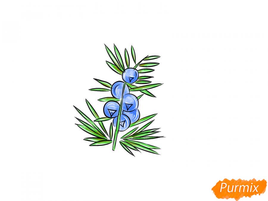 Рисуем веточку можжевельника с ягодами - шаг 8