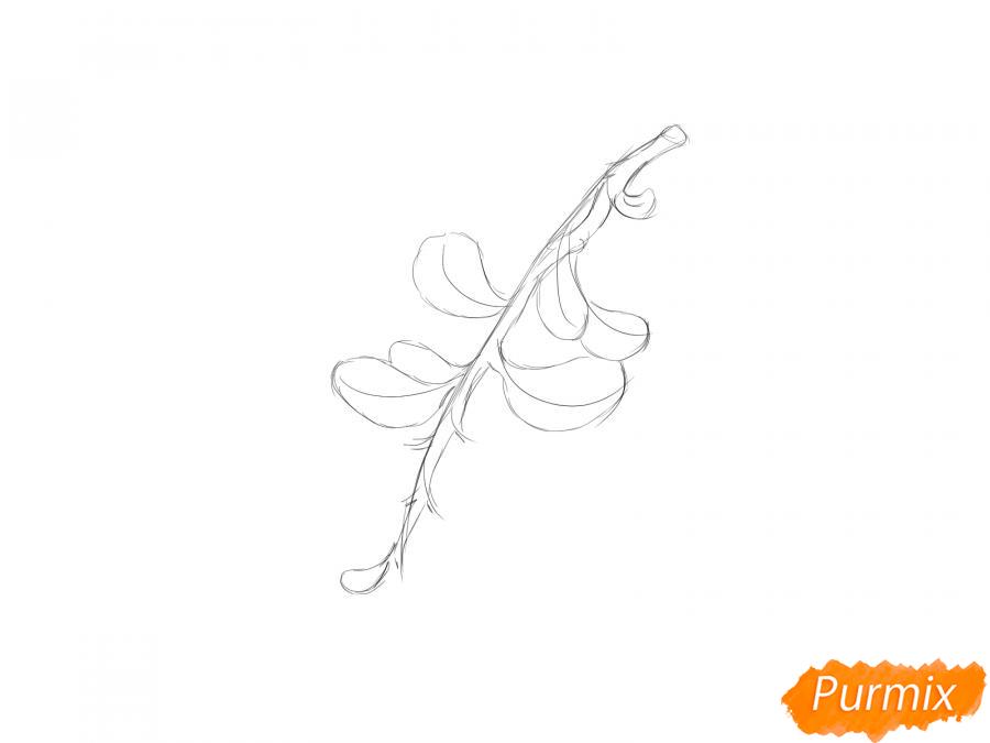 Рисуем веточку с ягодами брусники - шаг 2