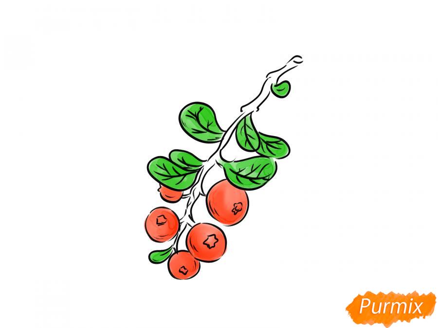 Рисуем веточку с ягодами брусники - шаг 7
