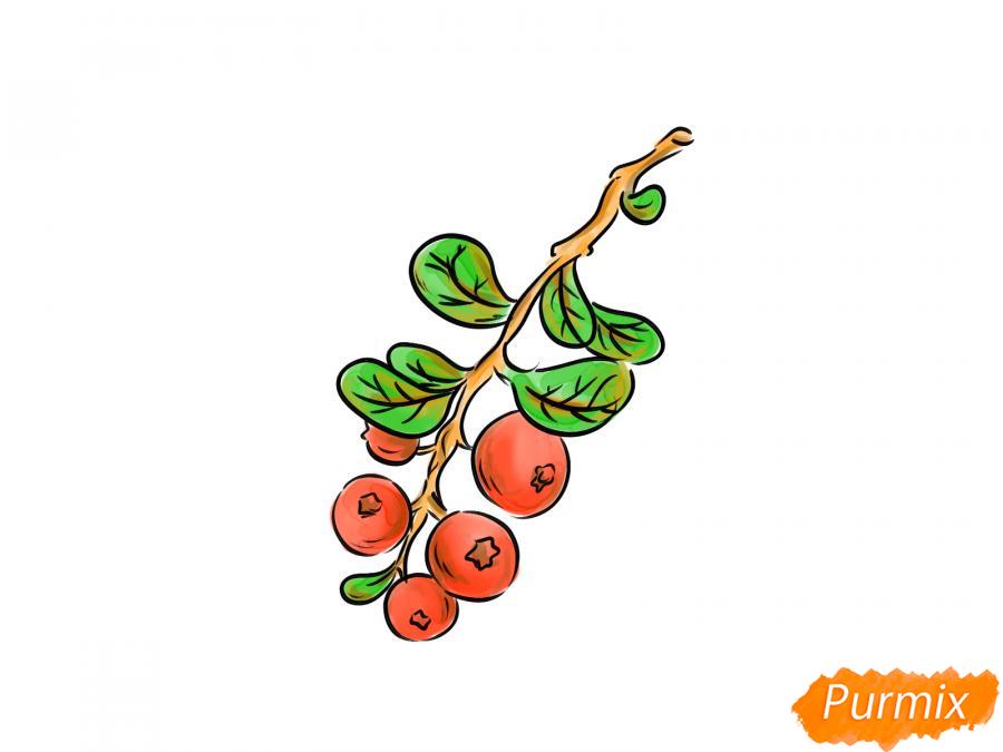 Рисуем веточку с ягодами брусники - шаг 8
