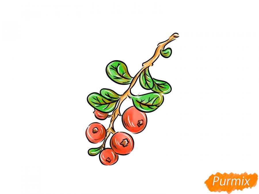 Рисуем веточку с ягодами брусники - шаг 9