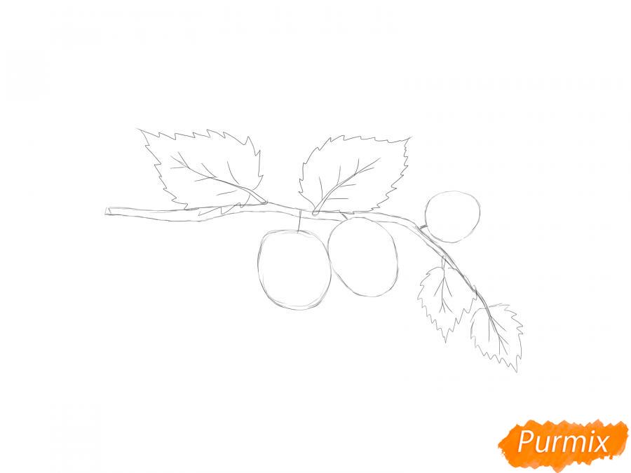 Рисуем веточку с ягодами ежевики - шаг 2