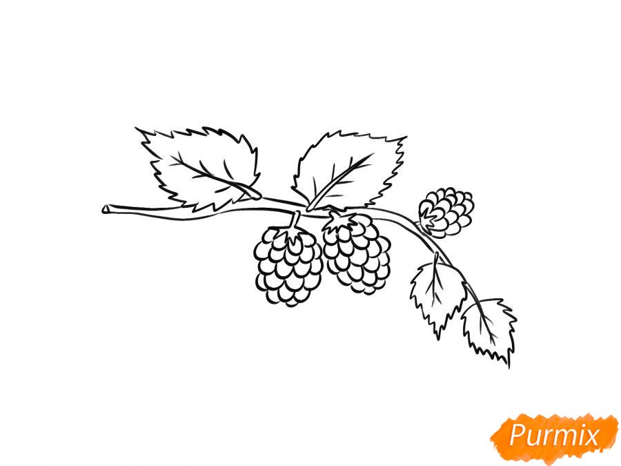 Рисуем веточку с ягодами ежевики - шаг 5