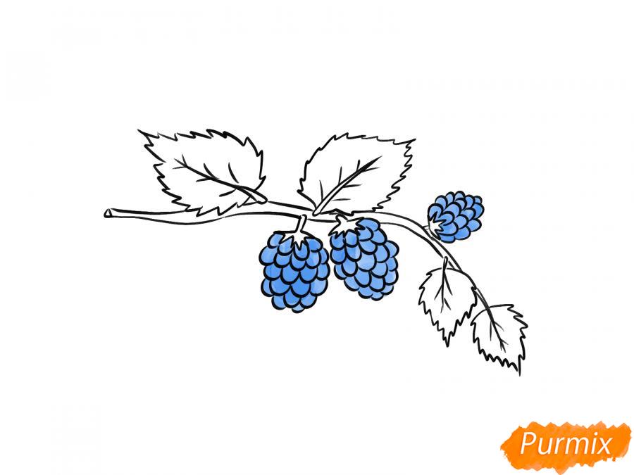 Рисуем веточку с ягодами ежевики - шаг 6