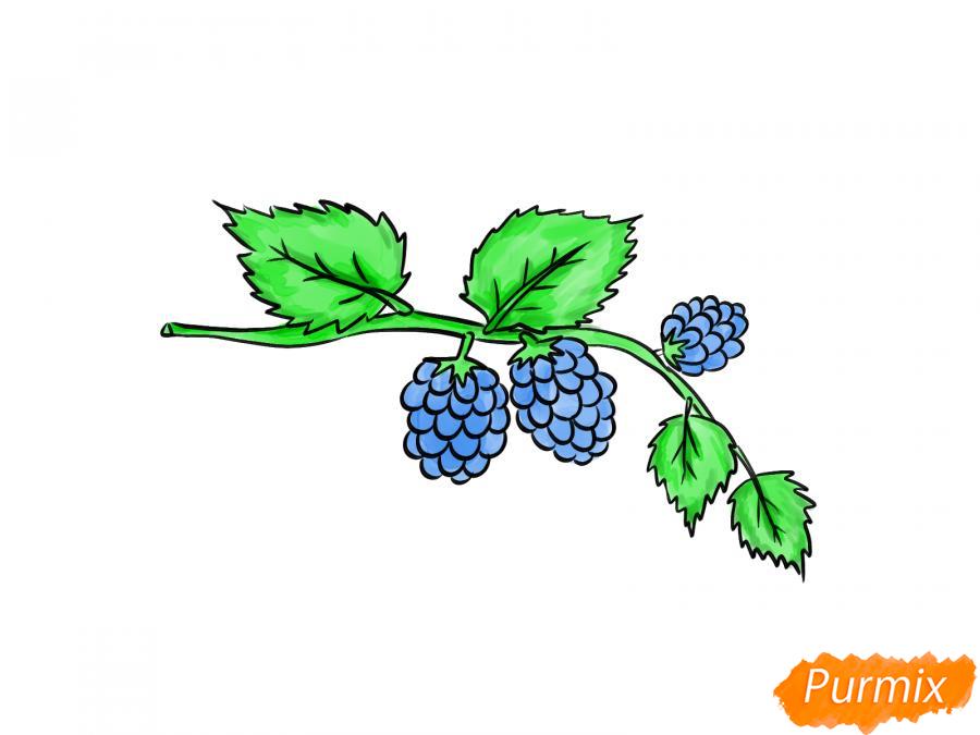 Рисуем веточку с ягодами ежевики - шаг 7