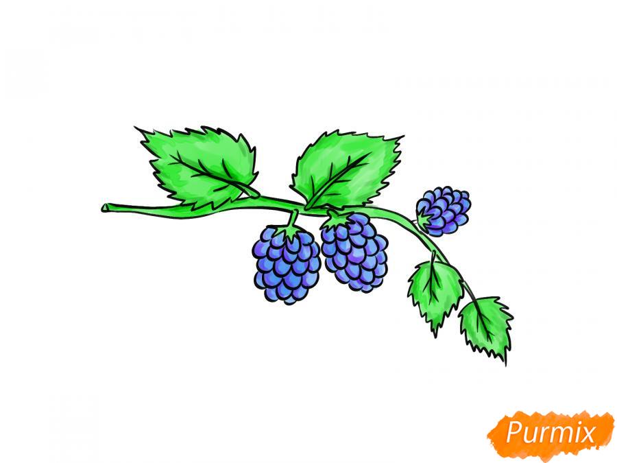 Рисуем веточку с ягодами ежевики - шаг 8