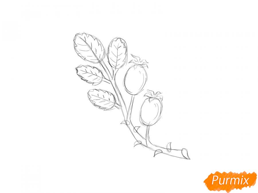 Рисуем веточку с ягодами шиповника - шаг 5