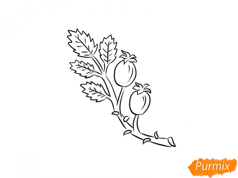 Рисуем веточку с ягодами шиповника - шаг 6