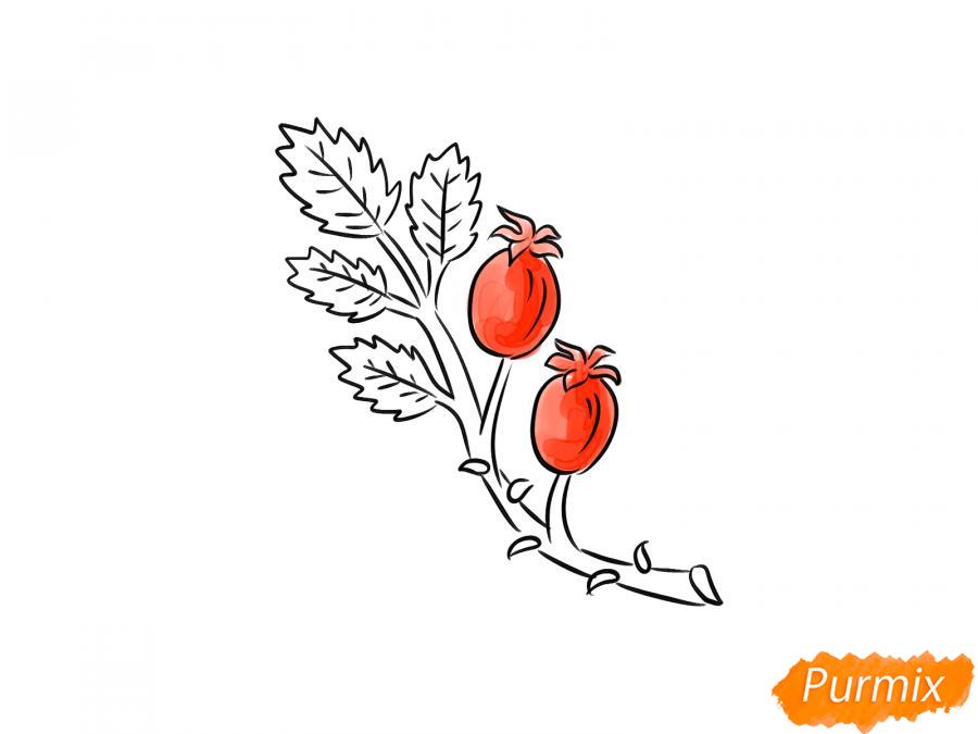 Рисуем веточку с ягодами шиповника - шаг 7