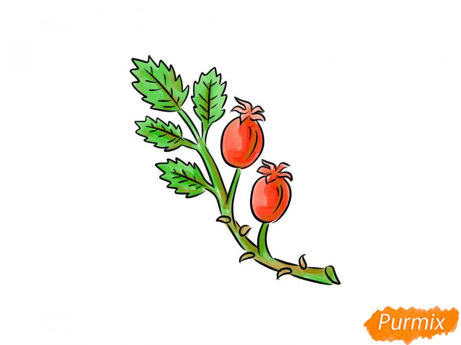 Рисуем веточку с ягодами шиповника - шаг 8