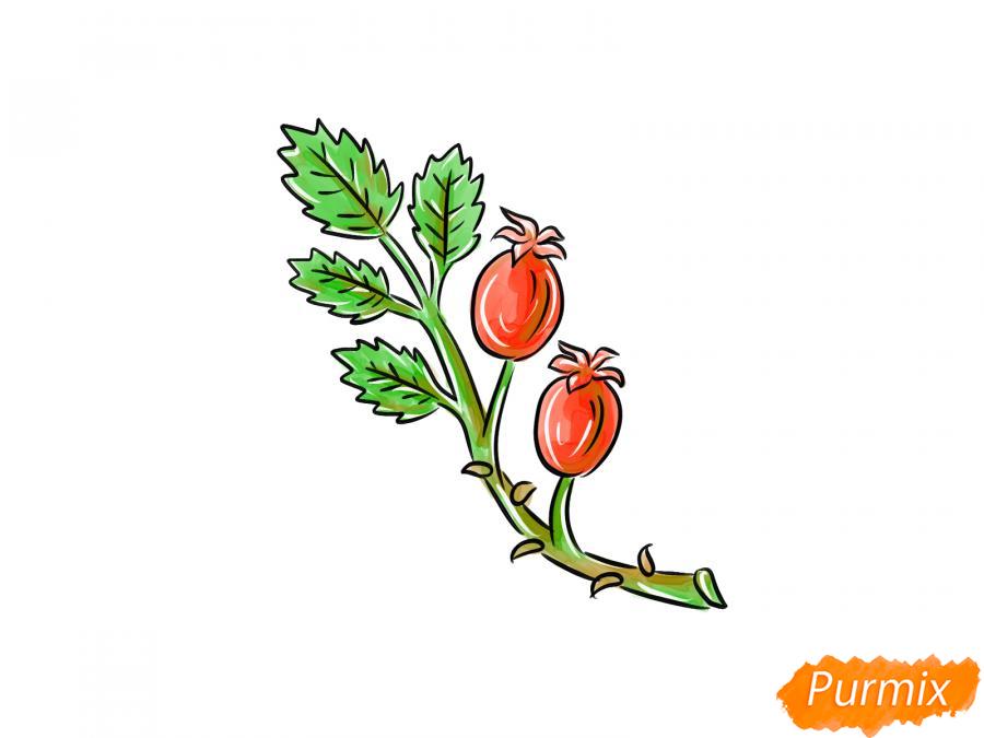 Рисуем веточку с ягодами шиповника - шаг 9