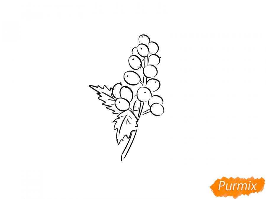 Рисуем воронец красноплодный - шаг 4