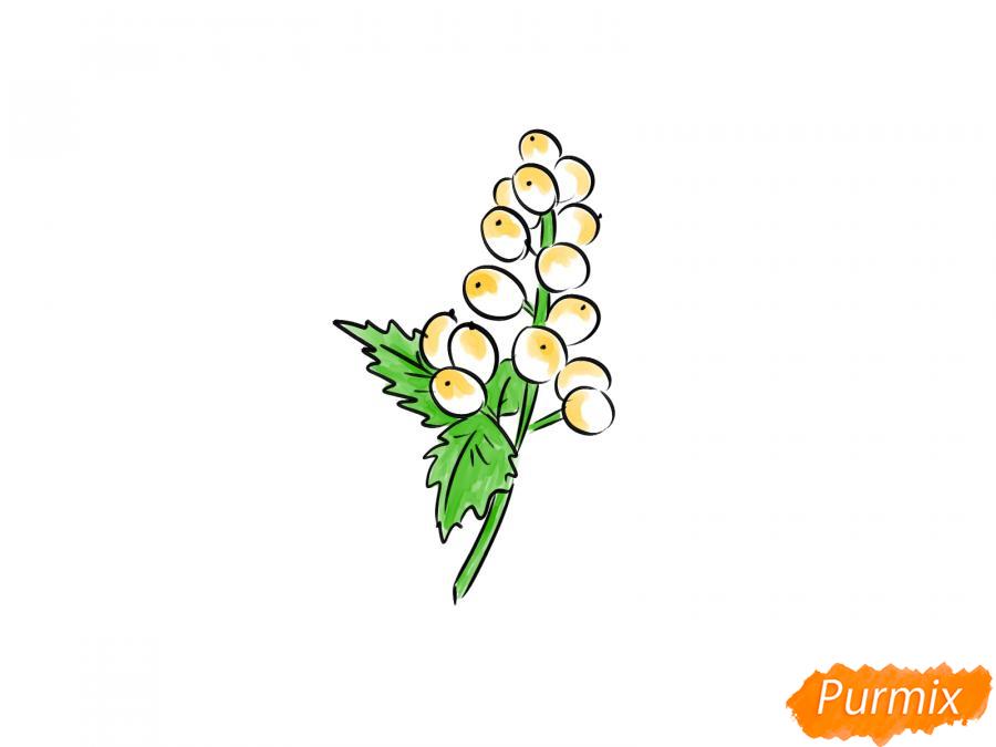 Рисуем воронец красноплодный - шаг 6