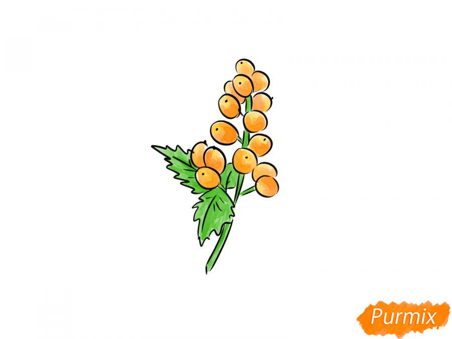 Рисуем воронец красноплодный - шаг 7