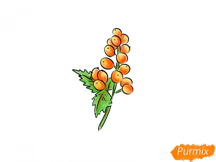 Рисуем воронец красноплодный - шаг 8
