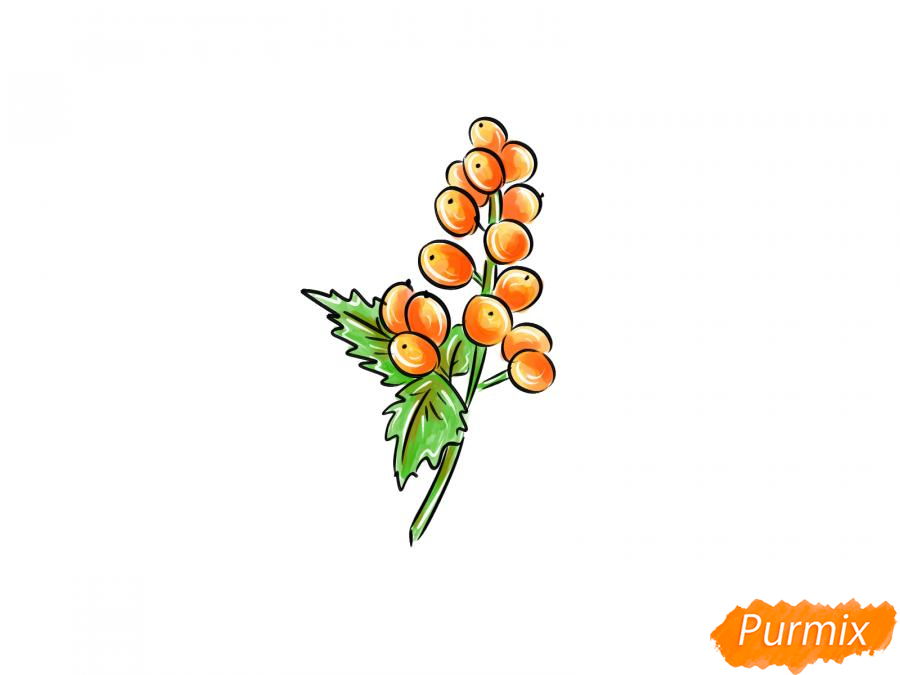 Рисуем воронец красноплодный - шаг 9