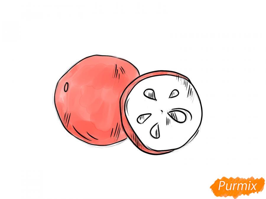 Рисуем ягоду рябины в разрезе - шаг 5