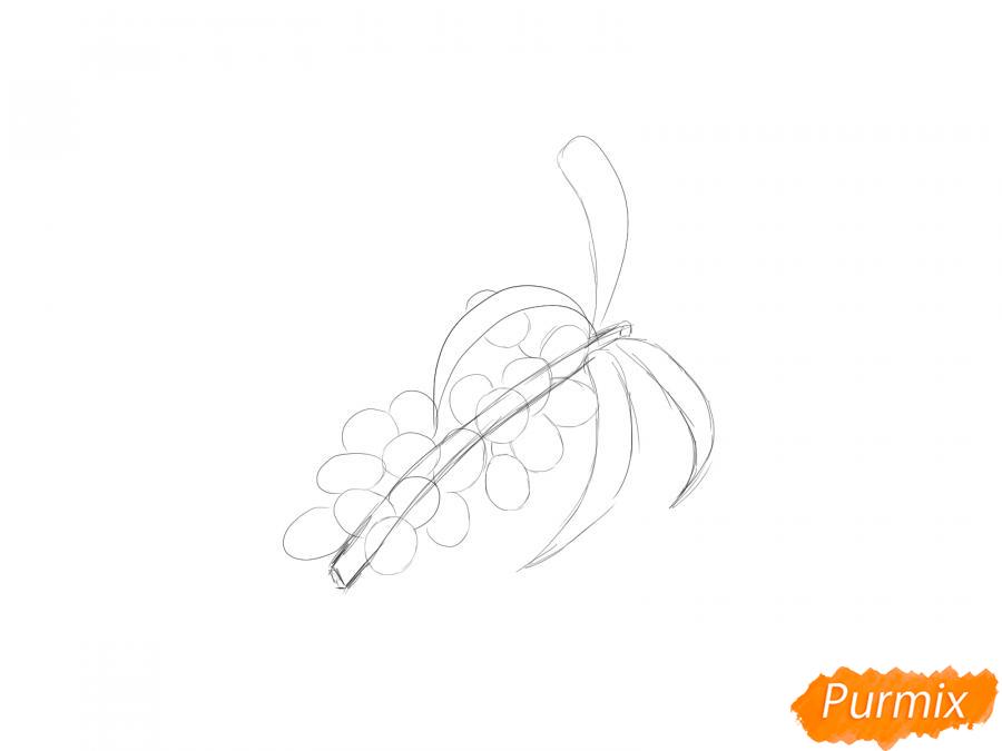 Рисуем ягоды облепихи на ветке - шаг 3