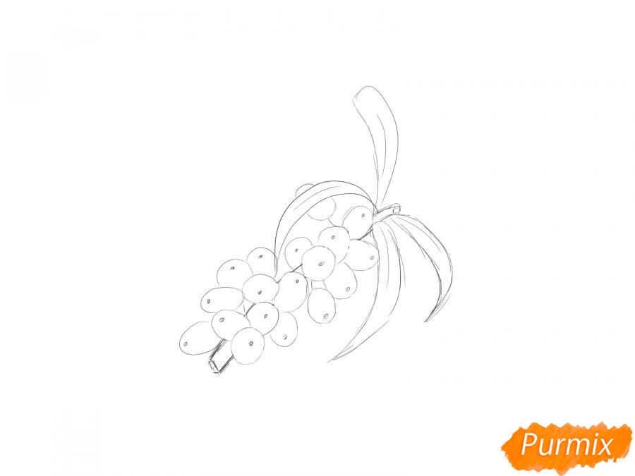 Рисуем ягоды облепихи на ветке - шаг 4