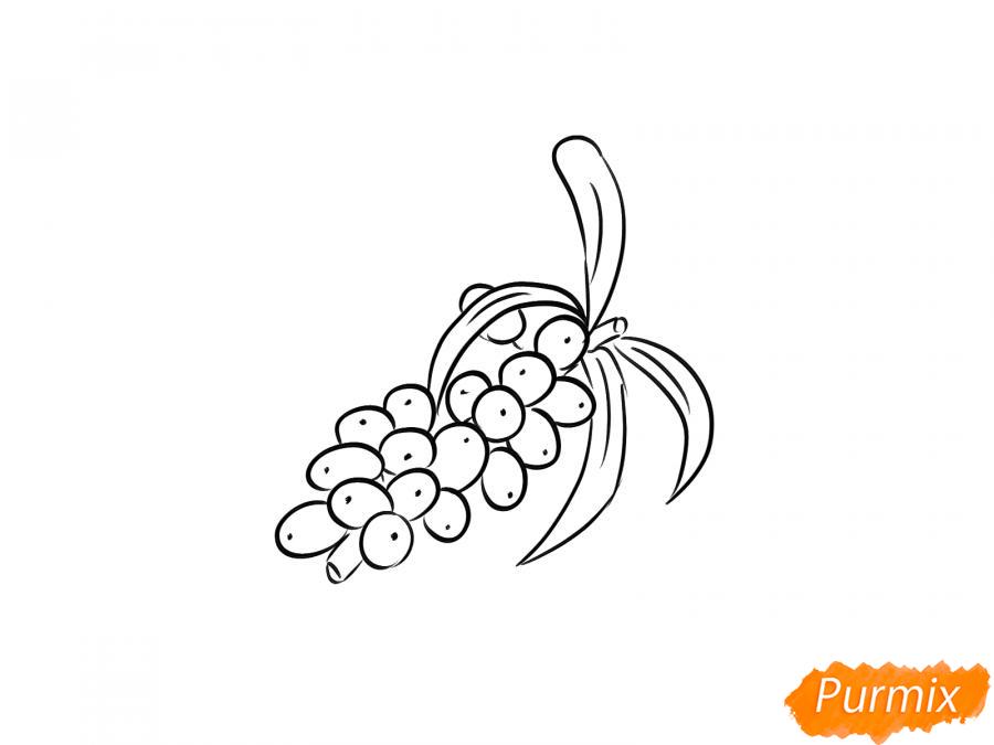 Рисуем ягоды облепихи на ветке - шаг 5