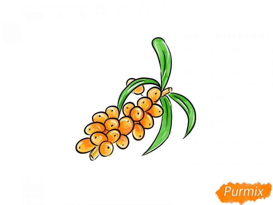 Рисуем ягоды облепихи на ветке - шаг 8